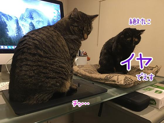 05062020_cat2.jpg