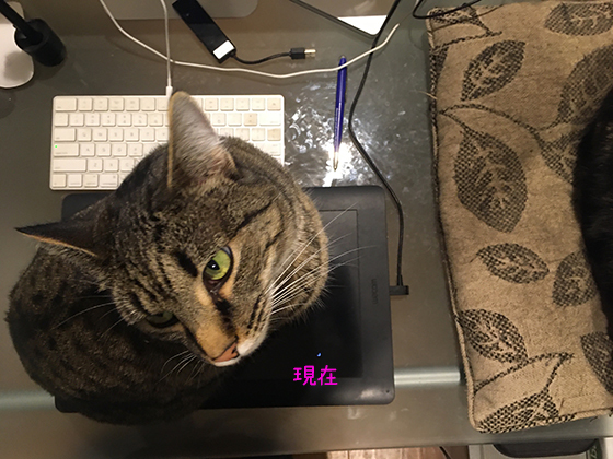 05062020_cat4.jpg