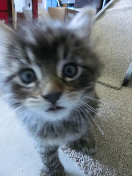 05102020_cat3.jpg