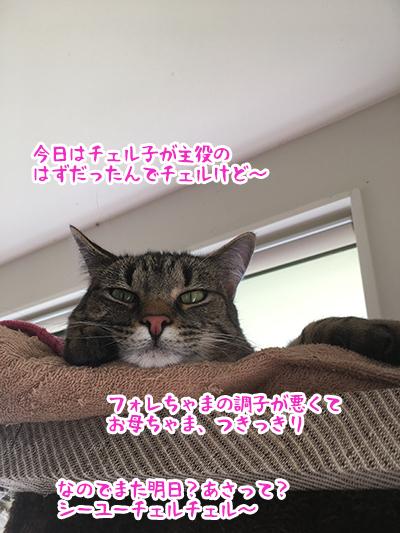 25042020_catpic1.jpg