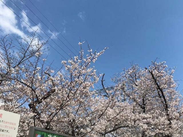 2020桜0