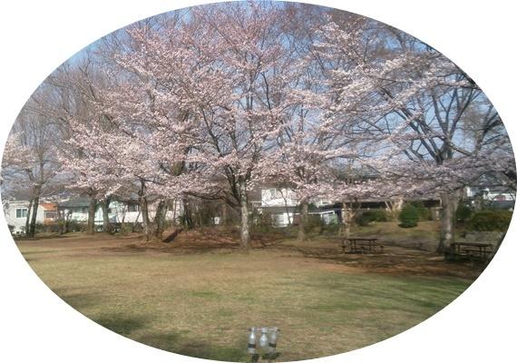 1 木球場の桜