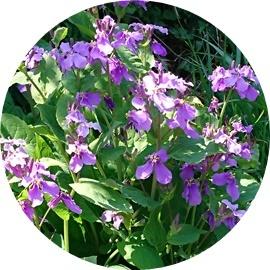 7 土手に咲く花