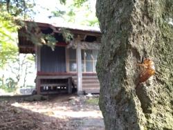 kurosawa036.jpg