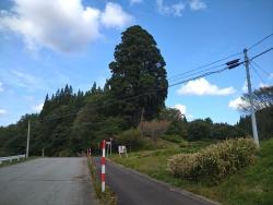 souzensugi020.jpg