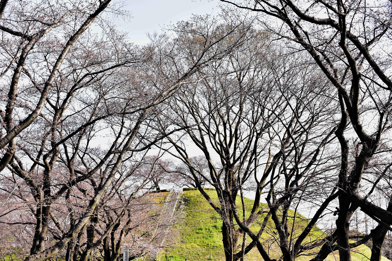 石田堤の先に丸墓山古墳