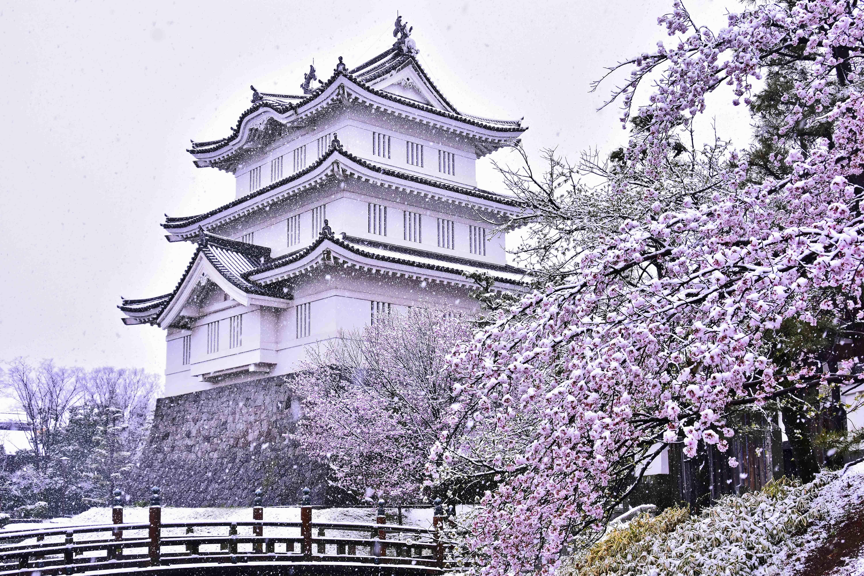 雪 桜 三階櫓