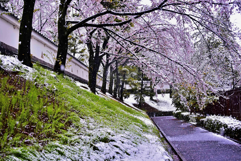 雪と桜1 忍城