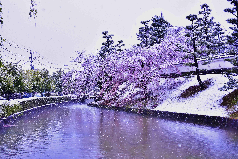 雪と桜3 忍城