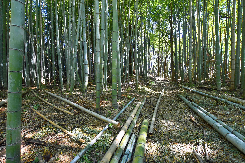 この竹林が郭2
