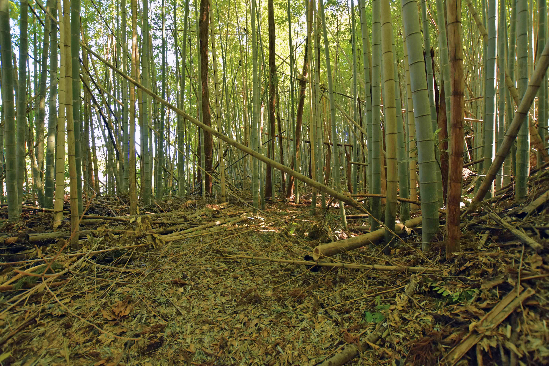 郭4 西側に一段下がり竹林