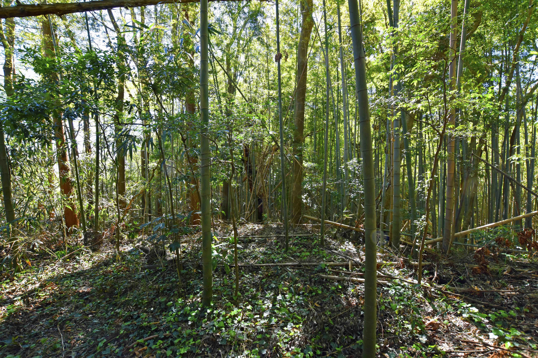 東に延びる尾根、孟宗竹の激藪