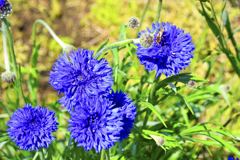 城址に咲く花