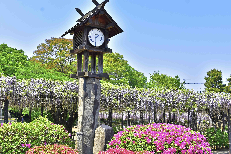 玉敷公園時計