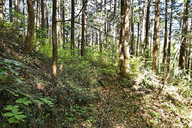 8 郭2西側の横堀 軽い藪