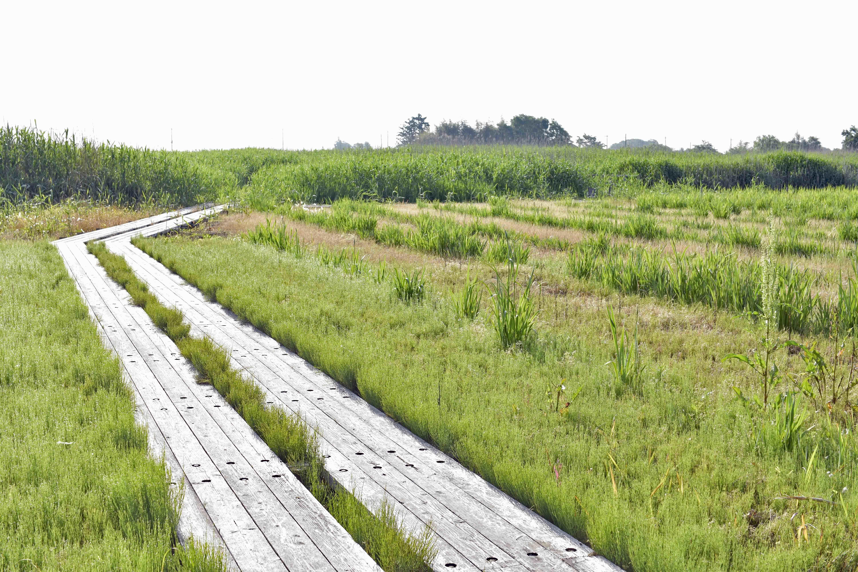 今からおよそ2万年前、最終氷河期に東京湾の海水面が130mも下がり、東京湾の海水がなくなり広い海岸平野になった。 <br />そこに、陸を流れていた利根川、荒川、その東側を渡良瀬川、思川が流れるようになり、川の流れたところは峡谷、残された部分は台地として残った。 <br />加須もその頃は、大宮から館林につながる台地の上にあり、この台地も長い間には川によって浸食されて、丘あり谷ありの変化にとんだ地形となった。 <br />最終氷河期が終わり、再び気候が温暖化し、海水面も上昇し現在の海水面より1~2m高くなり、関東平野の奥くまで海水が浸入してきた。 <br />この時代にできた湾を「奥東京湾」と呼び、縄文時代の前期約5000年前で、その波打ち際が「浮野」の地下と考えられる。波によって削られできた岸、谷に海の堆積物が堆積した。 <br />さらに、弥生時代、古墳時代にかけて加須とその近辺が沈み始めた(関東造盆地運動)。 そこに、西側を流れていた利根川、荒川が侵入し、川の堆積物が体積して、現在に至っている。 <br />地下の古い地層から地下水が湧き出し、「浮野」に低温と湿り気を与えていると考えられる。