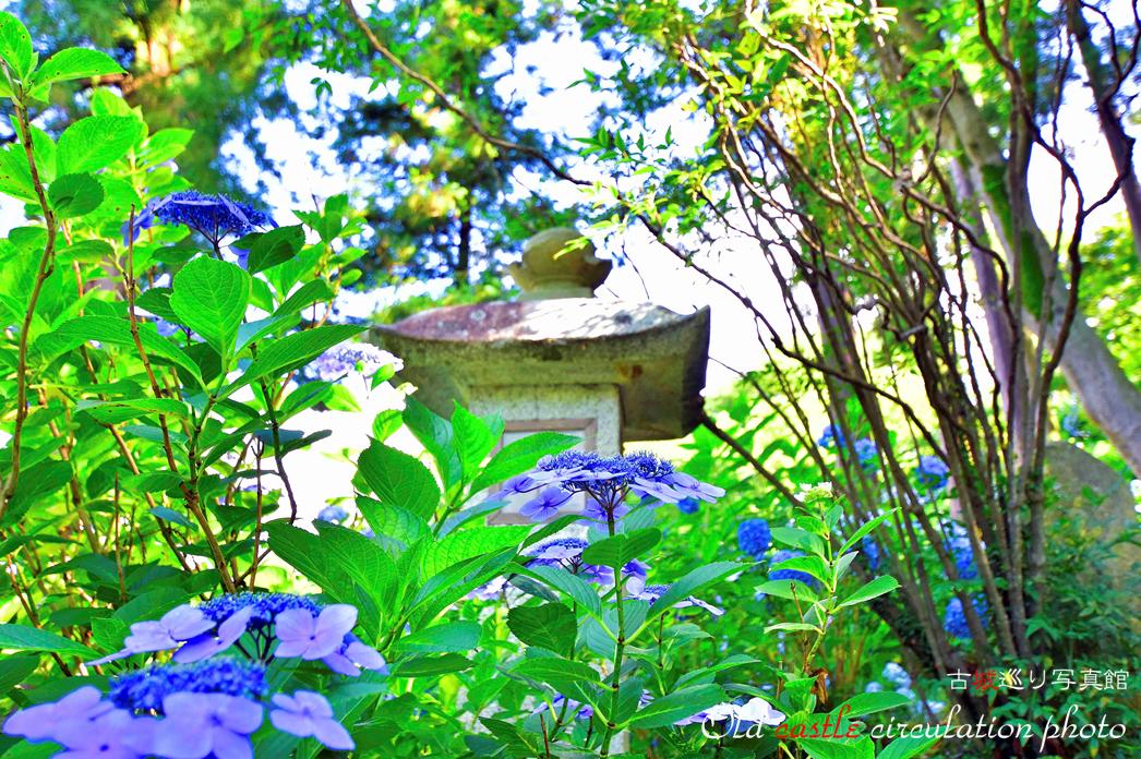 紫陽花と燈籠 雨引