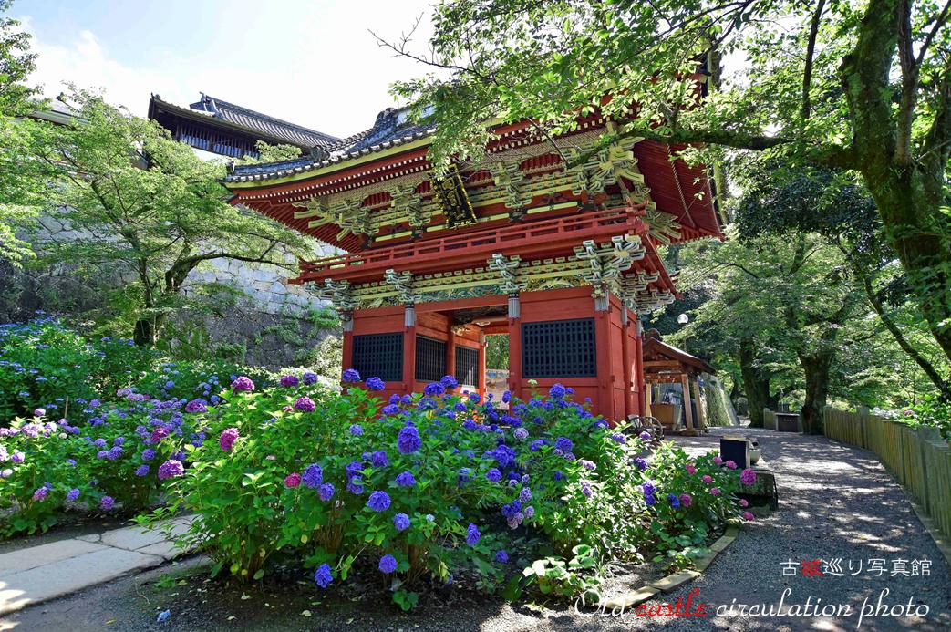 雨引 紫陽花と山門