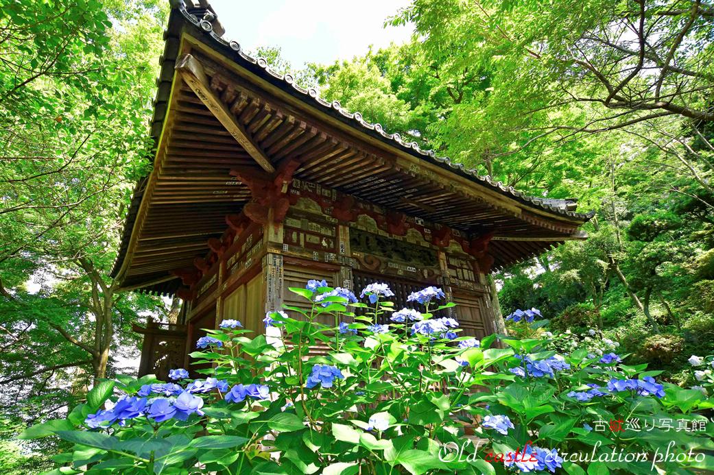 雨引 紫陽花とお堂