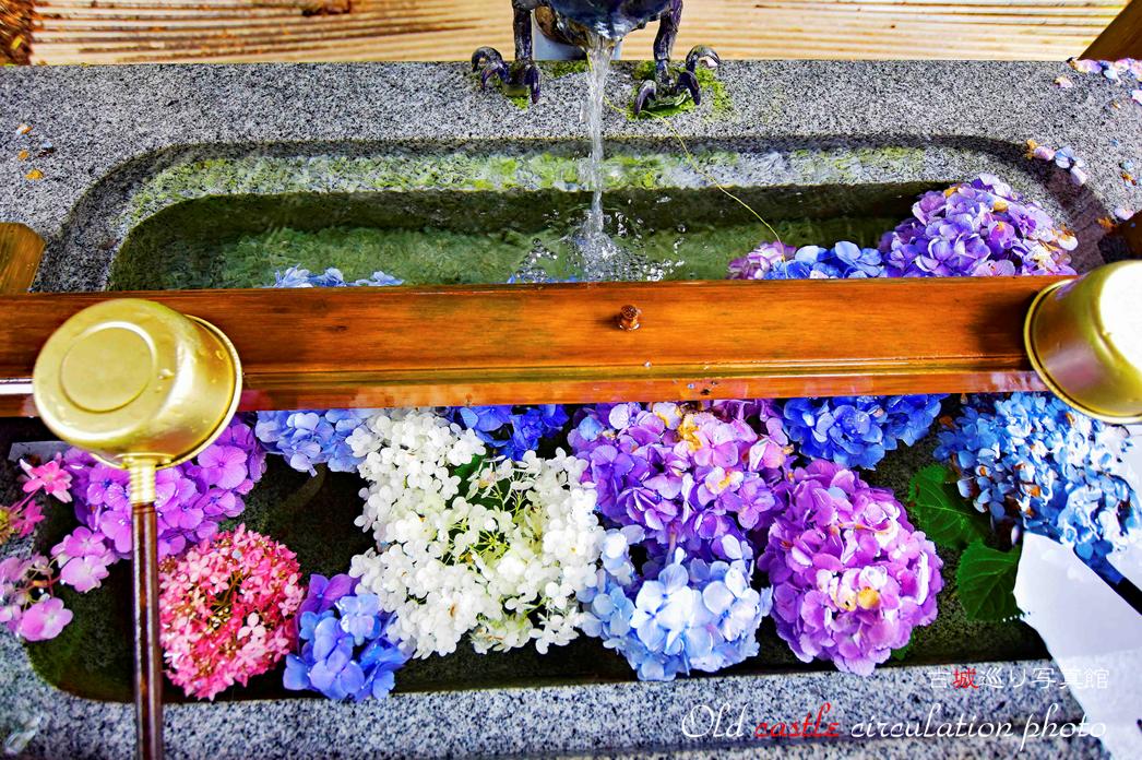 磯山神社 手水舎の水中花