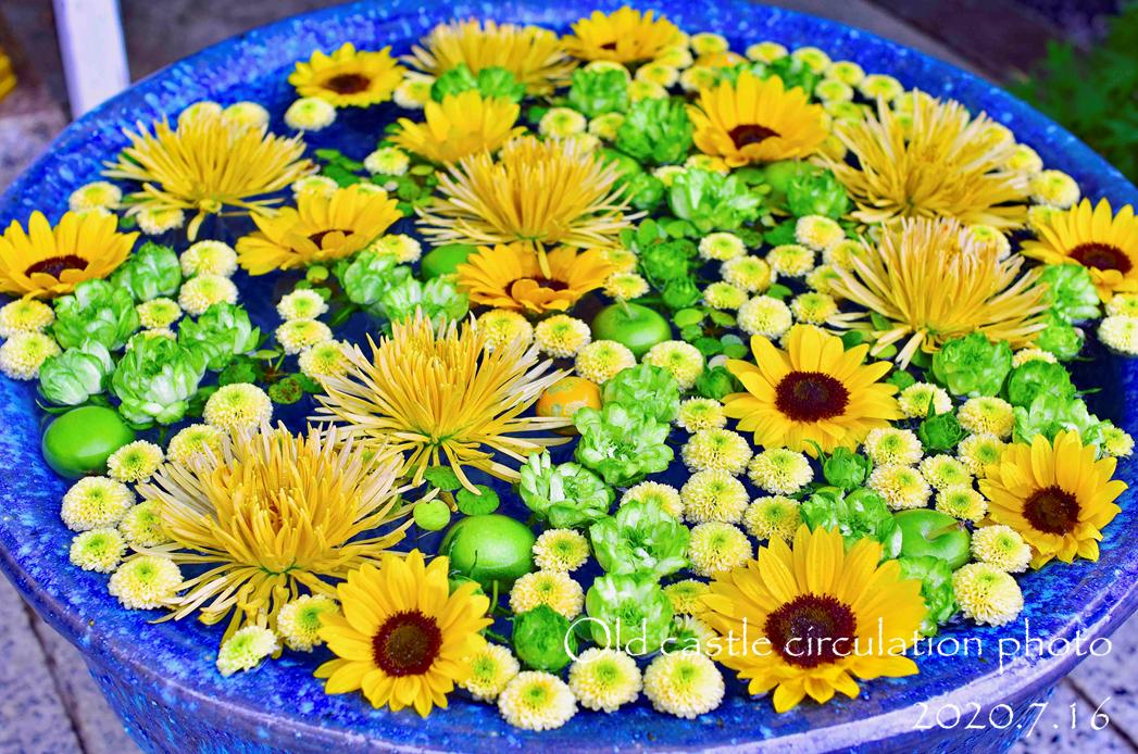 拝殿前の水中花