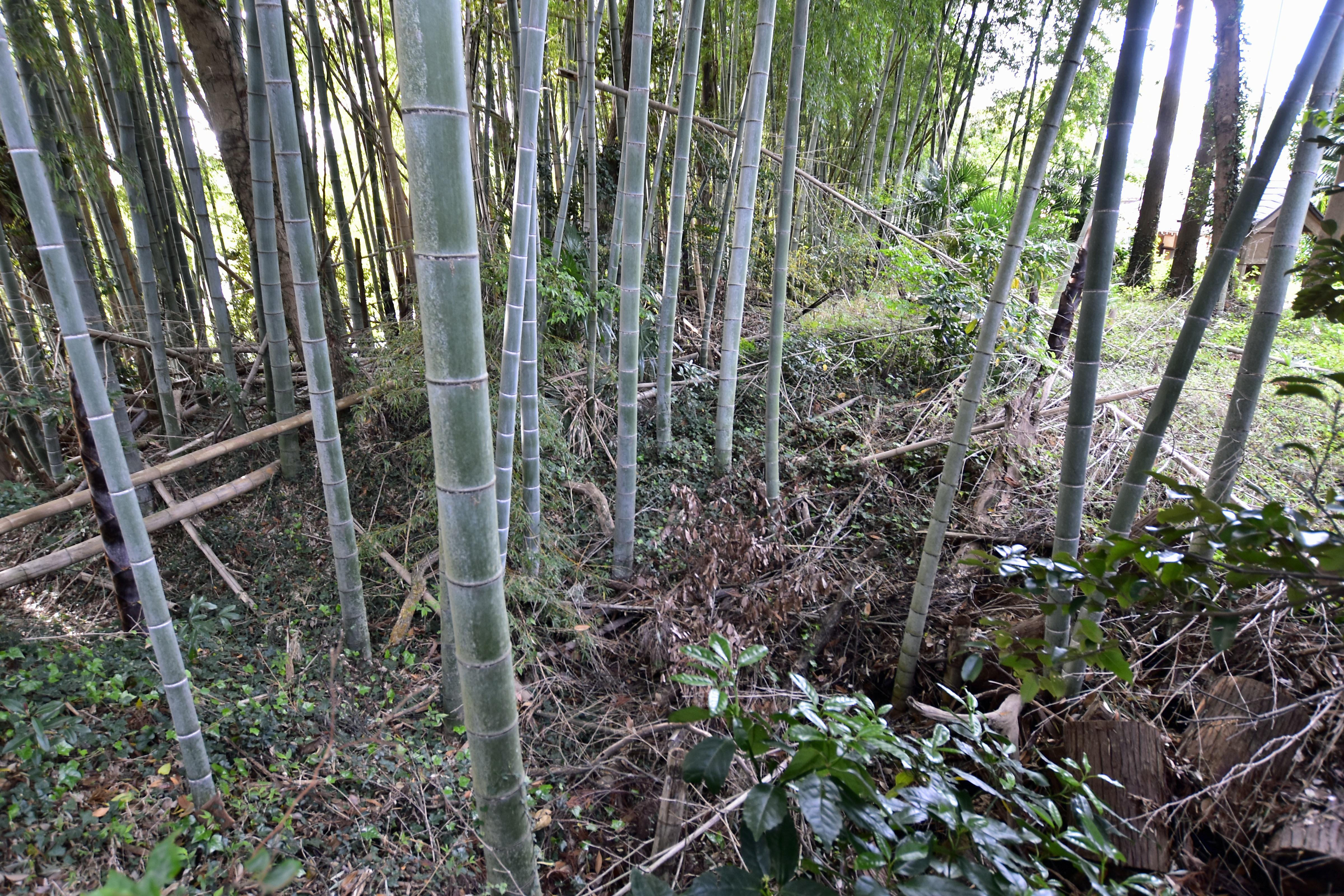 4五所神社裏手北側から延びる堀