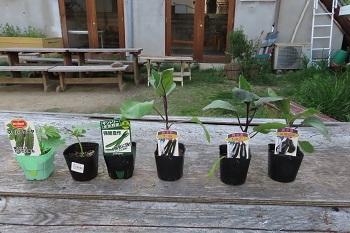 4月5日夏野菜の苗