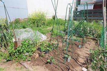 4月6日夏野菜定植