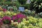 ボランティア花壇