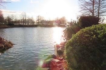 天満大池冬の夕暮れ