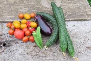 オクラ初収穫