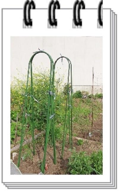 トマト定植4月15日