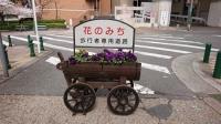 宝塚花の道②