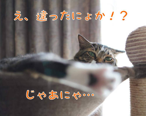 SON08113-.jpg