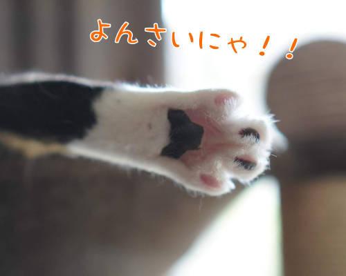SON08114-.jpg