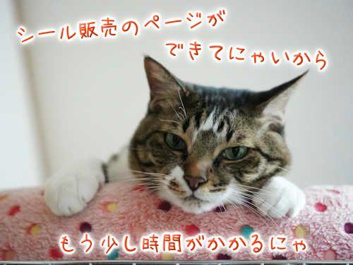 SON08394-201119.jpg