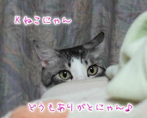 SON08645-201124.jpg