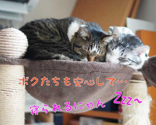 SON09259.jpg