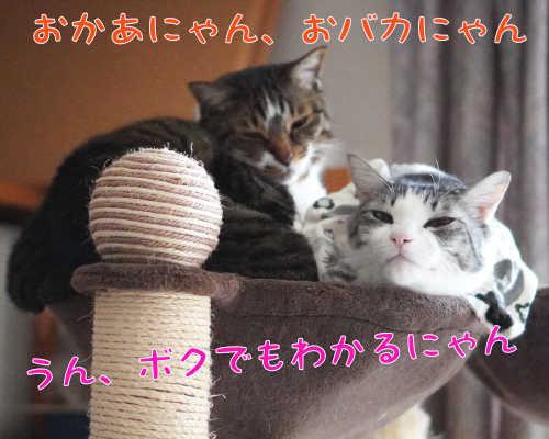 SON09271.jpg