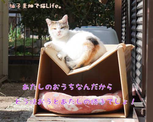 SON09389.jpg
