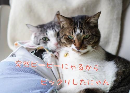 SON09548.jpg