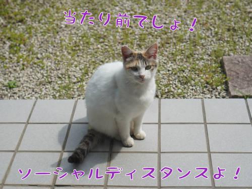 SON09962.jpg