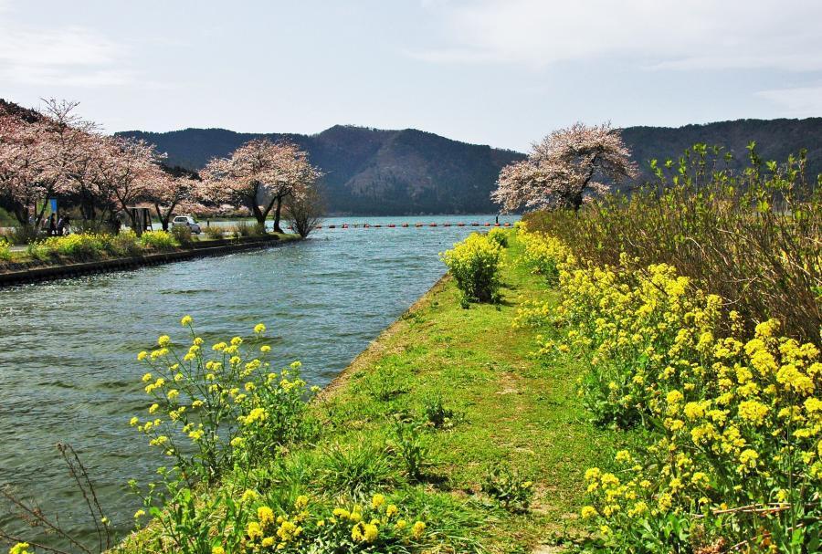 湖北の桜2